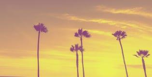 Tropische palmen langs Californische stranden royalty-vrije stock fotografie