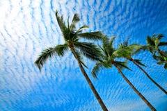 Tropische palmen in Mexico Stock Afbeelding