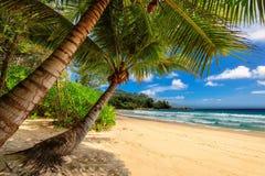 Tropische Palmen setzen in Jamaika auf karibischem Meer auf den Strand stockbild