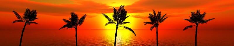 Tropische palmen tegen de hemel Stock Afbeelding