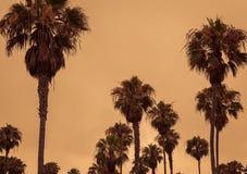 Tropische Palmen tegen een oranje hemel royalty-vrije stock foto's