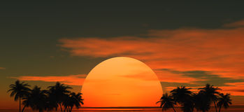 Tropische palmen tegen van de zonsondergang Stock Foto's