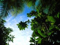 Tropische palmen vroege ochtend met benadrukte bladeren Stock Foto