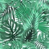 Tropische palmmonstera verlaat naadloos patroon vector illustratie