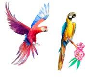 Tropische papegaaien stock fotografie