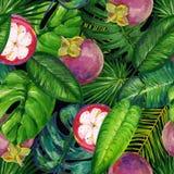 Tropische patroon van de gouache het naadloze zomer met tropische bladeren en mangostans op een donkere achtergrond stock illustratie