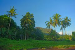 Tropische Philippinen stockbilder