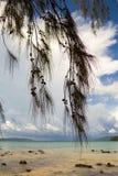 Tropische pijnboomtakken met kegels op een achtergrond van een overzees landschap Royalty-vrije Stock Foto