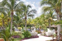 Tropische Pool Stock Afbeelding
