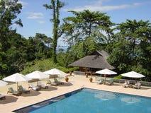Tropische pool Royalty-vrije Stock Foto's