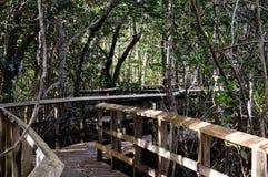 Tropische Promenaden von Süd-Florida Lizenzfreies Stockbild