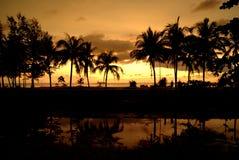 Tropische pulms auf dem Sonnenuntergang, Himmelhintergrund Stockbilder