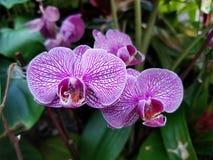 Tropische purpurrote Blumen stockbild