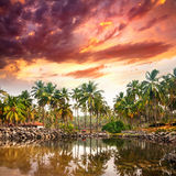 Tropische Rücksortierung stockbild
