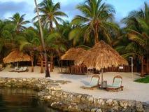 Tropische Rücksortierung in der Morgen-Leuchte Stockbilder