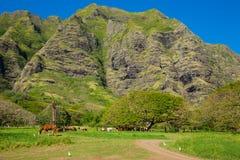 Tropische Ranch lizenzfreie stockbilder