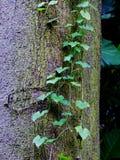 Tropische Reben auf Baumstamm stockbild
