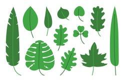 Tropische reeks Hand getrokken vectorbladillustratie Bladeren van esdoorn, berk, monstera, banaan, palm, thee, eik en andere Groe vector illustratie
