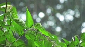 Tropische regen stock videobeelden