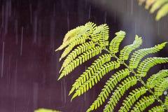 Tropische regen in het bos Stock Foto's