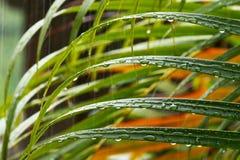 Tropische Regentropfen auf Blättern lizenzfreies stockbild