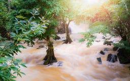 Tropische regenwoud en stroom bij de provincie van Phang Nga royalty-vrije stock foto's
