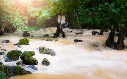 Tropische regenwoud en stroom bij de provincie van Phang Nga stock afbeeldingen