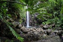Tropische Regenwoud en Waterval royalty-vrije stock fotografie