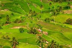 Tropische Reisterrassen Lizenzfreies Stockfoto