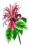 Tropische rode bloem hoofdwacht Royalty-vrije Stock Fotografie