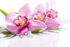 Tropische rosa Orchideenanlage stockbilder