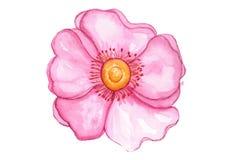 Tropische rosafarbene Blume Stockbild
