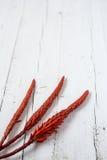 Tropische rote Blume Stockfoto