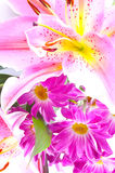 Tropische roze lelie Stock Afbeelding