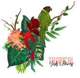 Tropische Sammlung des Vektors mit exotischen Blumen, Blättern und Vögeln lizenzfreie abbildung