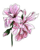 Tropische sardinheiras portugiesische Blumen für Heiratsdruckprodukte Lizenzfreie Stockbilder