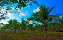 Tropische scène Royalty-vrije Stock Foto's