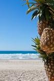 Tropische scène in Florianopolis Stock Afbeelding