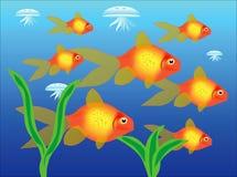 Tropische schöne Fische im Wasser Lizenzfreies Stockfoto