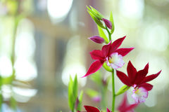 Tropische schöne Orchidee Lizenzfreie Stockfotos