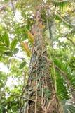 Tropische Schönheit Stockfoto