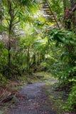 Tropische Schönheit Lizenzfreie Stockfotos