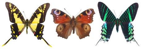 Tropische Schmetterlinge eingestellt Lizenzfreie Stockbilder