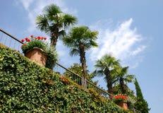 Tropische schoonheid (ii) stock fotografie