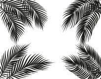 Tropische Schwarzweiss-Palmblätter auf vier Seiten set Getrennt auf weißem Hintergrund Abbildung Stockfotografie