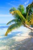 Tropische Seepalmen-Ansicht Stockbilder