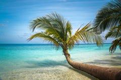 Tropische Seepalmen-Ansicht Stockfoto