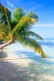 Tropische Seepalmen-Ansicht Stockbild