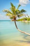 Tropische Seepalmen-Ansicht Lizenzfreie Stockfotos
