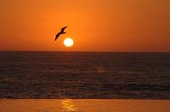 Tropische Sereniteit stock afbeeldingen